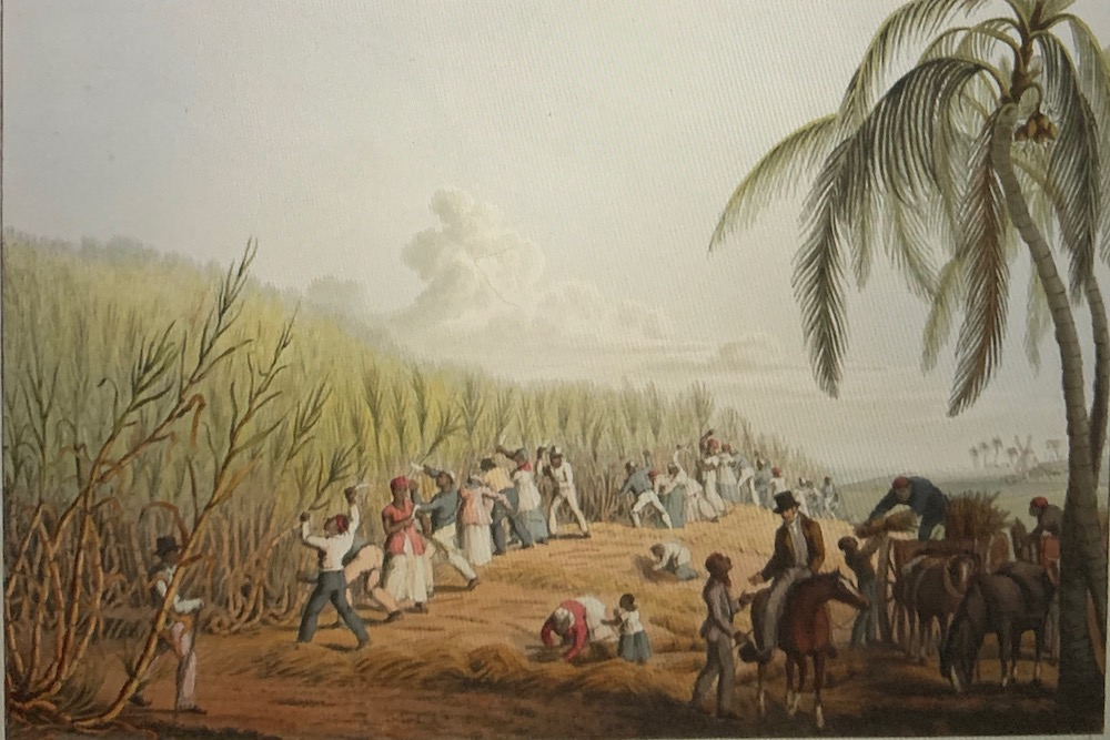 This image has an empty alt attribute; its file name is british-library-west-indies-1823-sugar-cane-william-clark.jpg